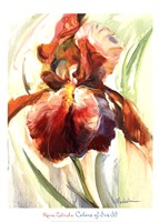 Colors of Iris II Fine Art Print