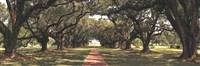 Enchanted Oaks Fine Art Print