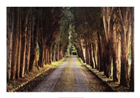 Tree Tunnel Fine Art Print