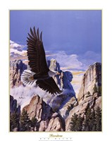 (Freedom) Eagle in Flight Fine Art Print