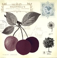 Cherry Notes Fine Art Print