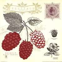 Raspberry Notes Fine Art Print