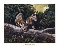 Bobcat Kittens Fine Art Print