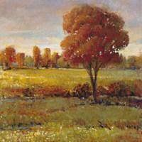 Field in Fall Fine Art Print
