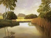 Reeds, Birches & Water I Fine Art Print
