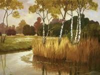Reeds, Birches & Water II Fine Art Print