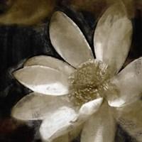Bronze Lily I Fine Art Print