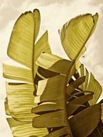 Palm Fronds III Framed Print