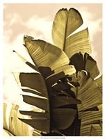 Palm Fronds IV Framed Print