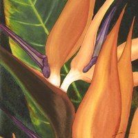 Bird Of Paradise Tile I Fine Art Print