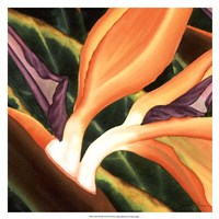 Bird Of Paradise Tile III Fine Art Print