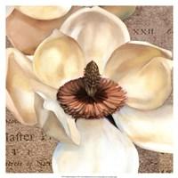 Magnolia Masterpiece I Fine Art Print