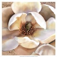 Magnolia Masterpiece II Fine Art Print
