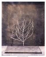 Desert Form II Fine Art Print