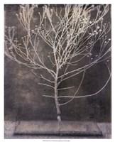 Desert Form IV Fine Art Print