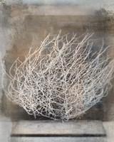 Desert Form V Fine Art Print