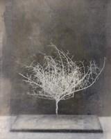 Desert Form VI Fine Art Print