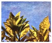 Sun Toward I Fine Art Print
