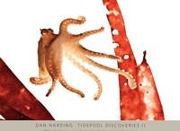 Tidepool Discoveries II Fine Art Print