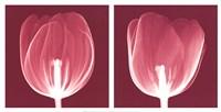 Tulips [Negative] Fine Art Print