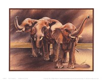 Family of Elephants Framed Print
