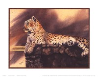 Lounging Leopard Framed Print