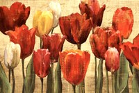 Tulip Fantasy on Cream Fine Art Print