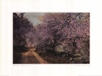 Blossom Bordered Fine Art Print
