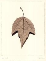 Red Maple Fine Art Print