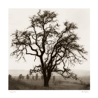 Country Oak Tree Fine Art Print