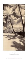 Palm Shadows II Fine Art Print