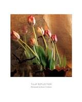 Tulip Reflection Fine Art Print