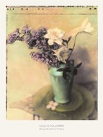 Lilac and Columbine Fine Art Print