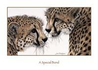 A Special Bond Fine Art Print