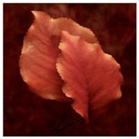 Summerset Red Fine Art Print