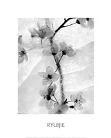 Cherry Blossoms in Winter Fine Art Print