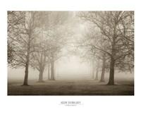 Layers of Trees II Fine Art Print