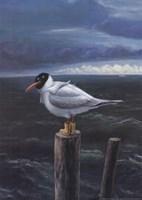 Seagull Fine Art Print