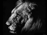 Wildlife Scratchboards I Fine Art Print