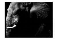 Wildlife Scratchboards III Fine Art Print