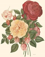 Vintage Roses I Fine Art Print