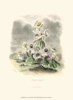 Le Fleur AnimT III Fine Art Print