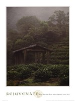 Rejuvenate - Tea Plantation Fine Art Print