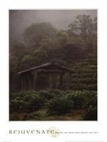 Rejuvenate - Tea Plantation Fine Art Print