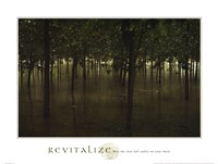 Revitalize - Forest Fine Art Print
