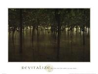 Revitalize - Forest Fine Art Print