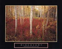 Discovery - Aspen Trees Fine Art Print