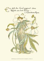 Shakespeare's Garden XII (Christmas Rose) Fine Art Print