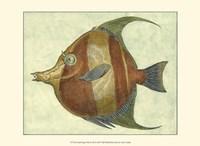 Small Angel Fish II Fine Art Print