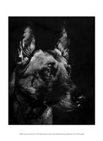 Canine Scratchboard V Fine Art Print